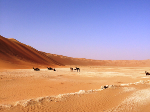 Abu Dhabi Lewa desert